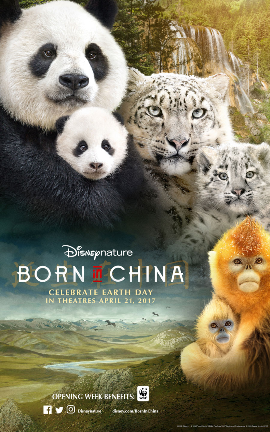 Image result for disney born in china movie