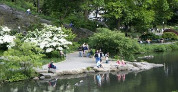 Rediscovering New York— going green