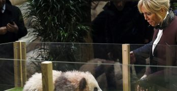 1st panda born in France gets name from China, first lady